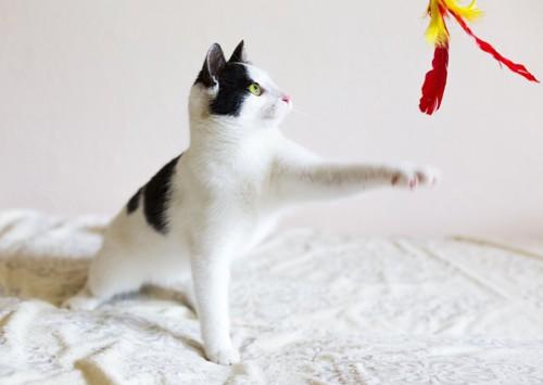 おもちゃに手を伸ばす猫