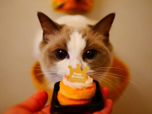 1歳の誕生日の猫