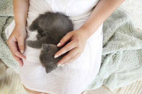 膝の上で眠るグレーの子猫