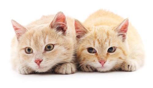 仲良しの猫達