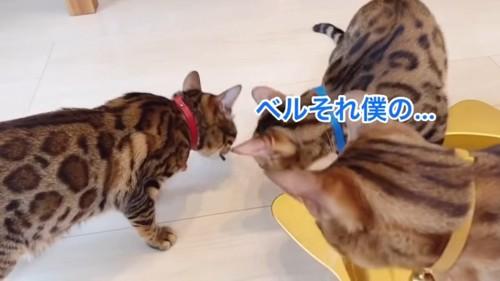 拾って食べる猫と見ている猫