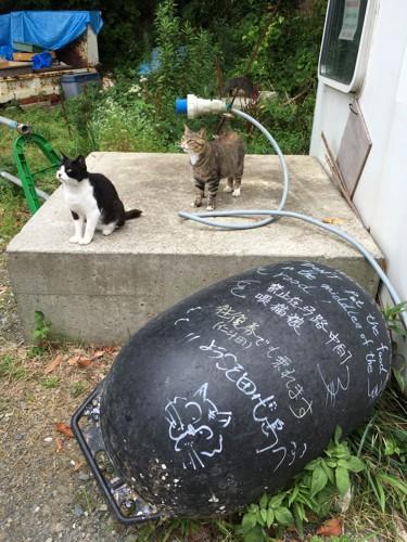 二斗田港にいた猫