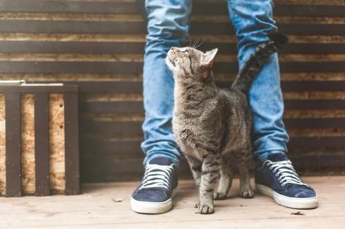 飼い主の足にすり寄って甘える猫
