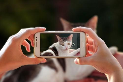 愛猫を撮影する飼い主