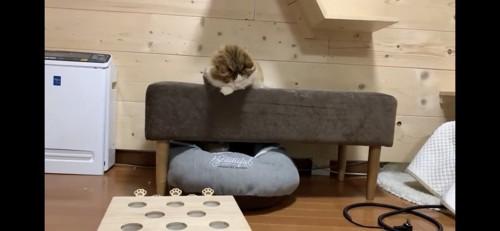 ソファの下を気にする猫