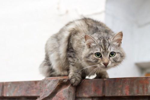 姿勢を低くして不安そうな猫