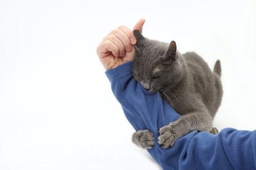 飼い主の手にしがみつく猫
