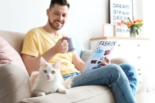 男性と一緒にソファーで寛ぐ猫