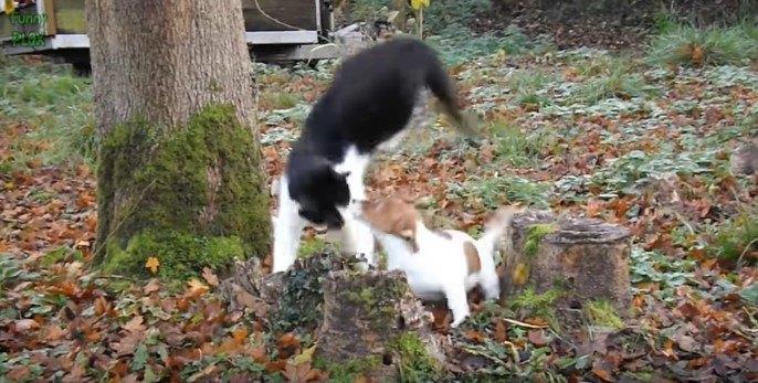 子犬と遊ぶ黒白猫