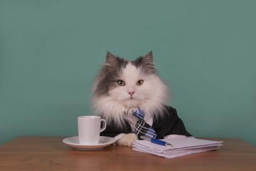 スーツを着て書類を読む猫