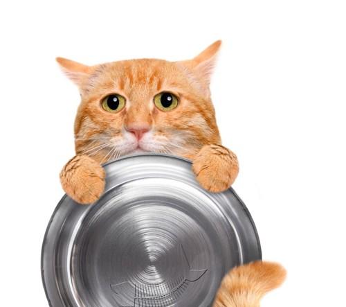 おぼんをもつ猫