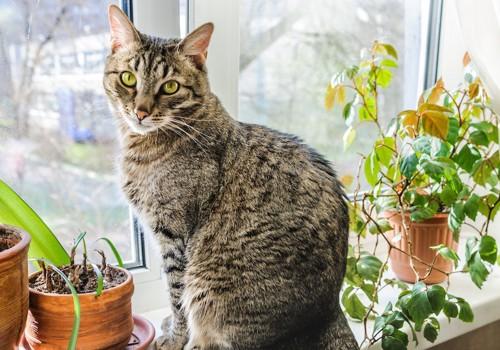 窓辺に座る猫と観葉植物