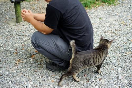 男性の後ろを歩く猫