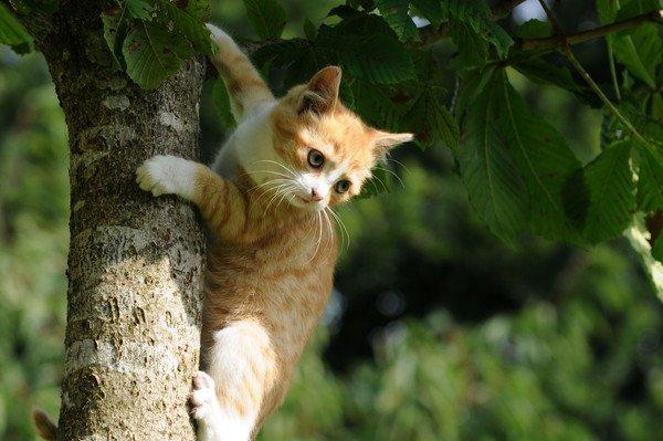 木登りする子猫