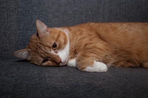 横向きに寝る猫