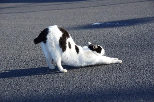 伸びをする白黒ネコ