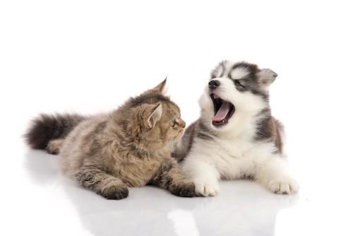 子犬の口の中を覗く猫