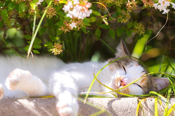 日向ぼっこする野良猫