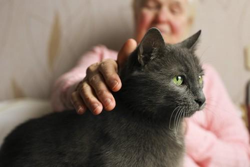 飼い主の膝に乗って撫でられている黒猫