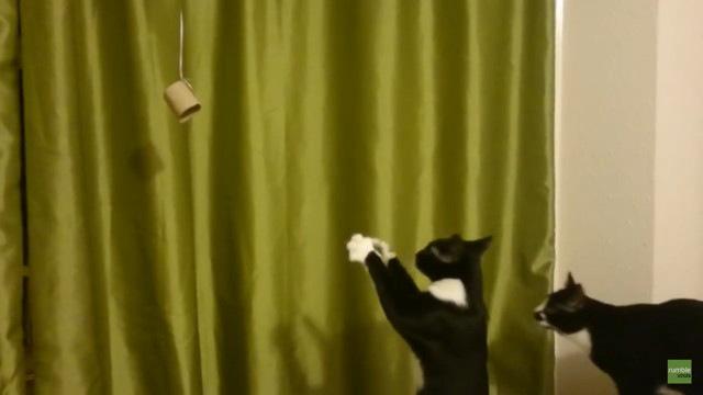 もう一匹猫が来る