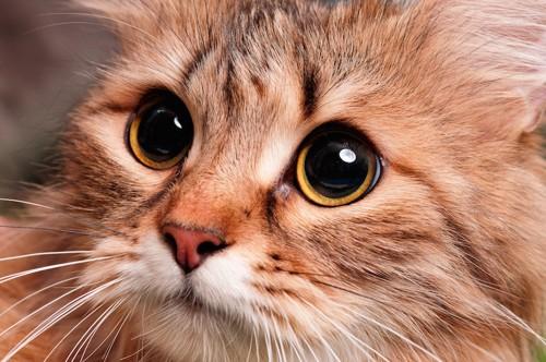 目を大きく開いている猫