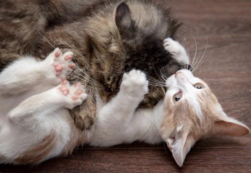 じゃれあう猫たち