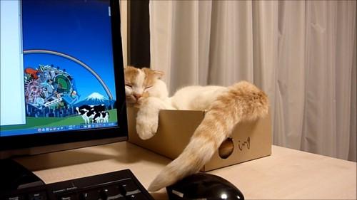 しっぽでマウスを触る猫