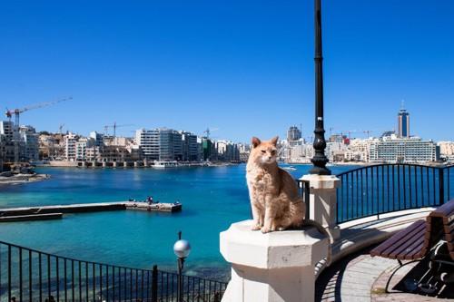マルタ島の橋の上の猫