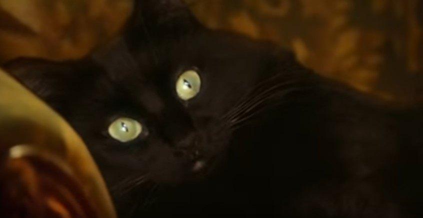 見つめるアウル・キティ
