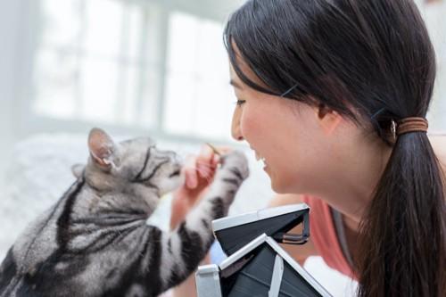 女性の手にパンチする猫