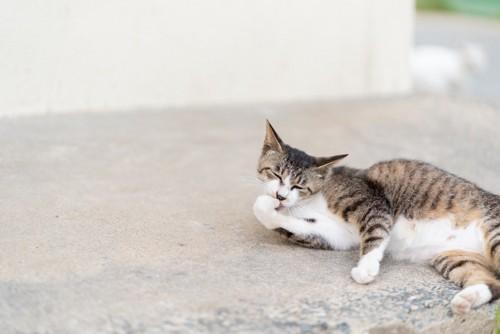 手を吸う猫