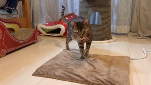 ペット用ホットカーペットの上に立つ猫