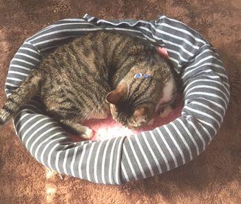 猫がベッドの中で寝ている