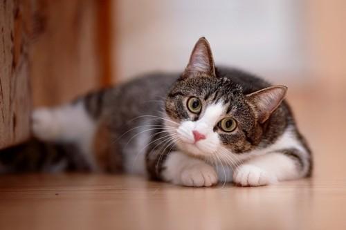 寝ながらこちらを見る猫