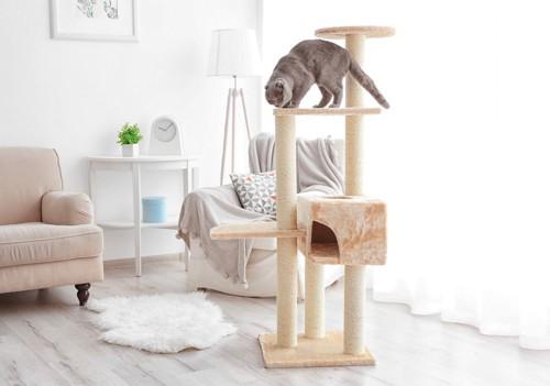 タワーに登る猫