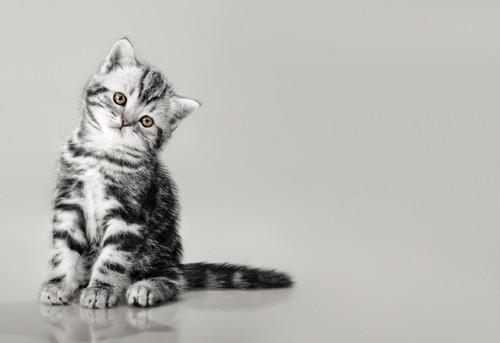悲しげな猫