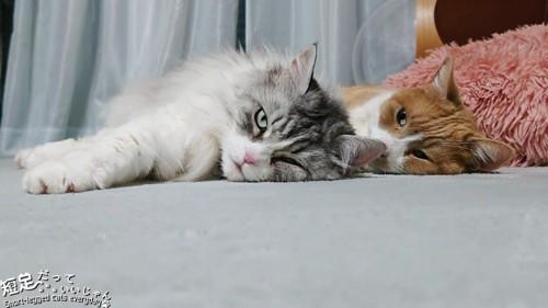 並んで寝る猫