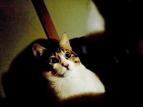 写真8となっている。暗闇で驚いている猫