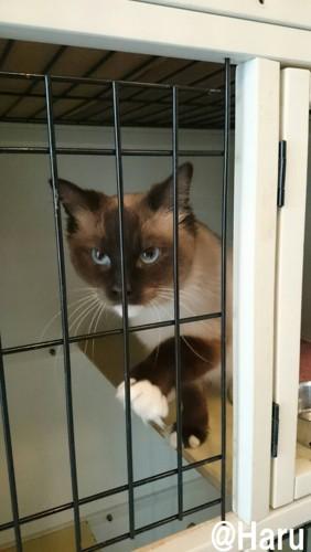 #ゲージの中の猫#