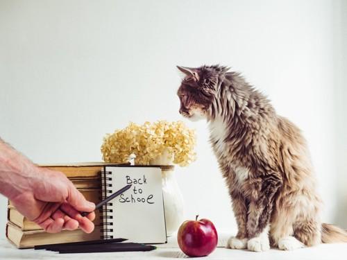 文字をみつめる猫