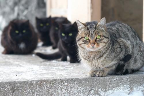 後ろに子分を従えている強いオス猫