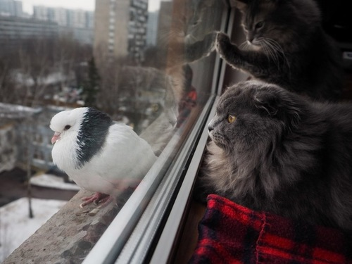 鳥を見つめる猫たち