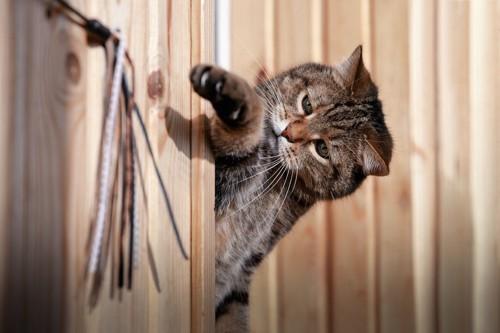 物陰から手を出す猫