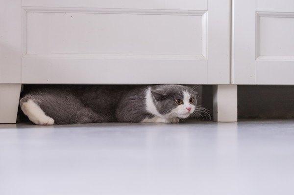 白いタンスの下に隠れる猫