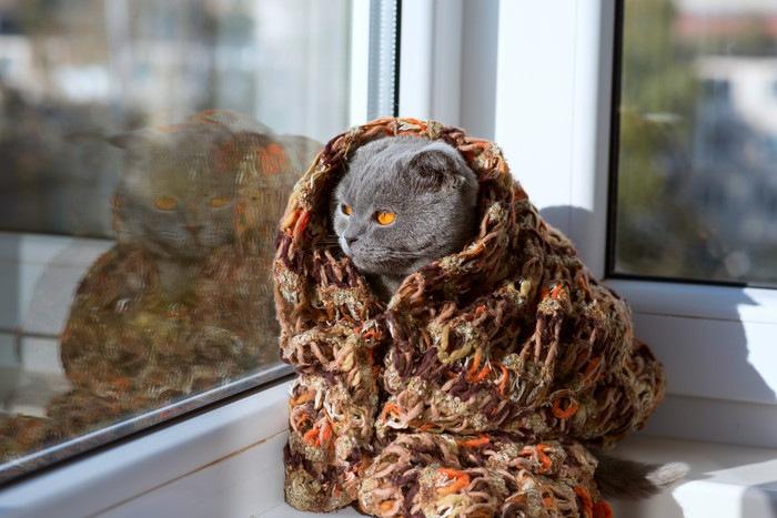 スカーフにくるまる猫