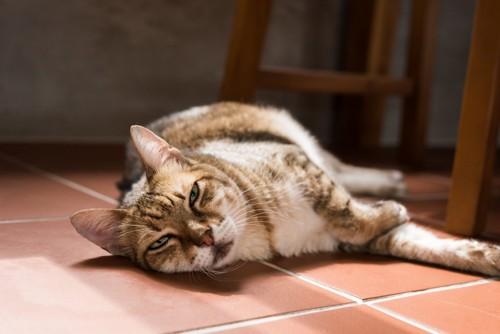 不満を抱えていそうな猫