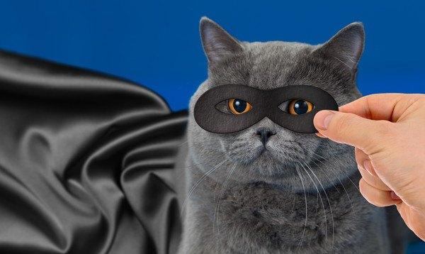 猫の目に黒いマスクを当てる