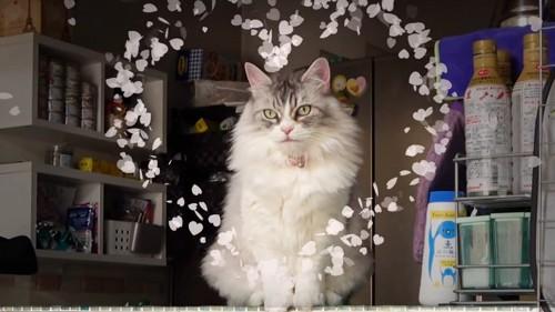 お座りして正面を見る猫