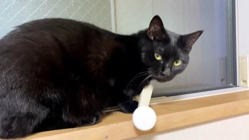 おすわりする黒猫