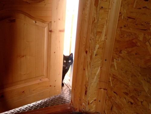 玄関のドアからこちらを見る猫